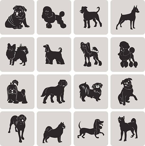 Hund Silhouette Schwarz Symbol Symbol gruppierten für einfache Bearbeitung set3 zu wechseln. – Vektorgrafik