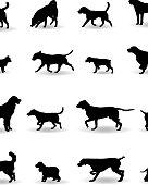 Variation of Dog's