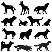 Dog silhouettes, working and wild