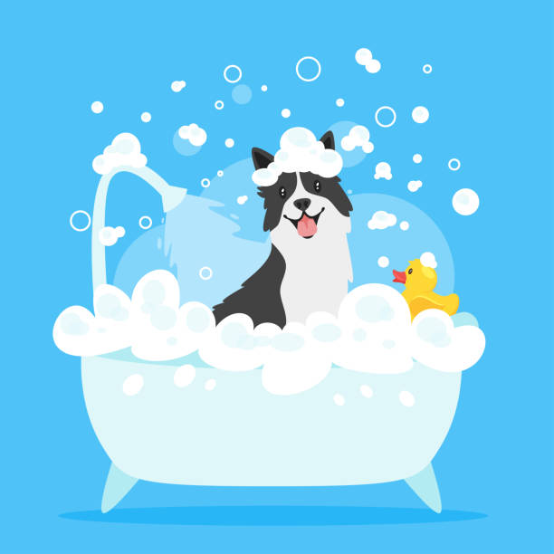 dog taking a bath Vector cartoon style illustration of cute border collie dog taking a bath full of soap foam. Yellow rubber duck in bathtub. Grooming concept. Blue background. bathroom backgrounds stock illustrations