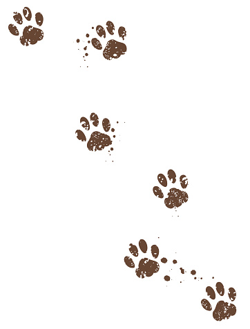 Dog tracks with muds on isolated background.