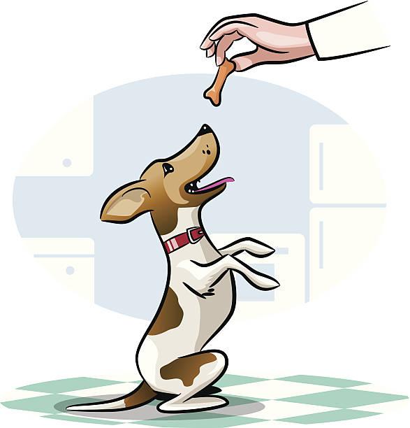 dog treat - dog treats stock illustrations