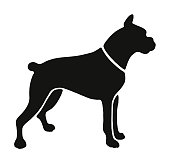 istock Dog 1003178078
