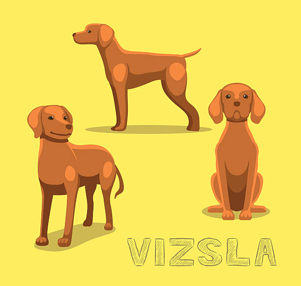 dog vizsla cartoon vector illustration - vizsla stock-grafiken, -clipart, -cartoons und -symbole