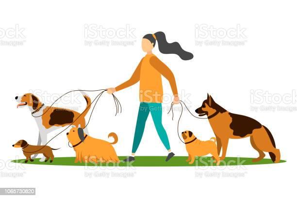 Dog walker vector id1065730820?b=1&k=6&m=1065730820&s=612x612&h=zapz4z7goz o8froy 264ohee58jotzk6yckxjbs ve=