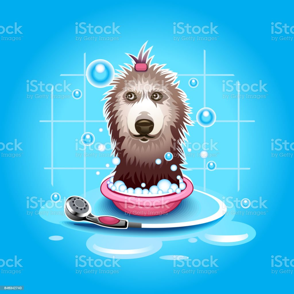 Dog wash royalty-free dog wash stock vector art & more images of animal