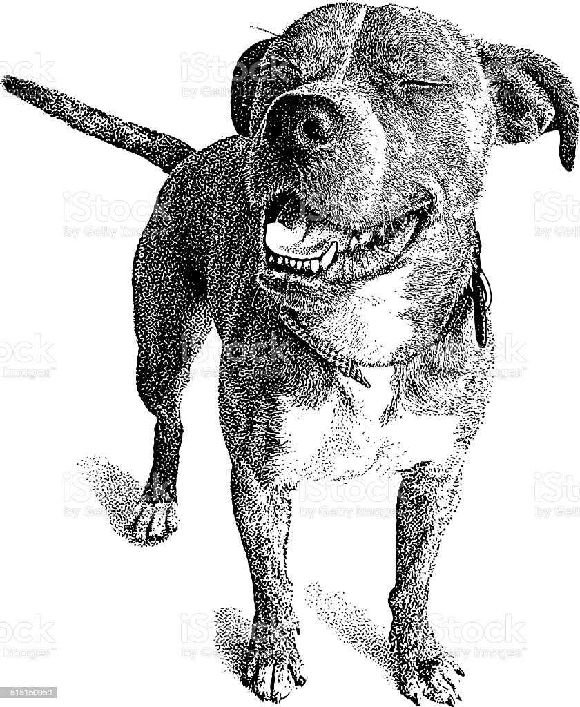 Dog With Funny Expression Boxer And Bulldog Mix Stock Vector Art ...
