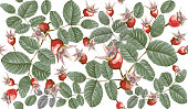 pattern painted in vector red and green, leaves and hips of dog rose, briar, carelessly scattered on white background