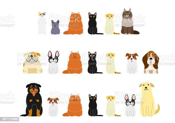 Dogs and cats border set vector id957120680?b=1&k=6&m=957120680&s=612x612&h=eywbhe2j xjbe85wldaifrh5owmbmnbhqc9amfll7 0=