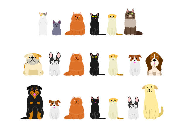 dogs and cats border set - cat stock illustrations, clip art, cartoons, & icons