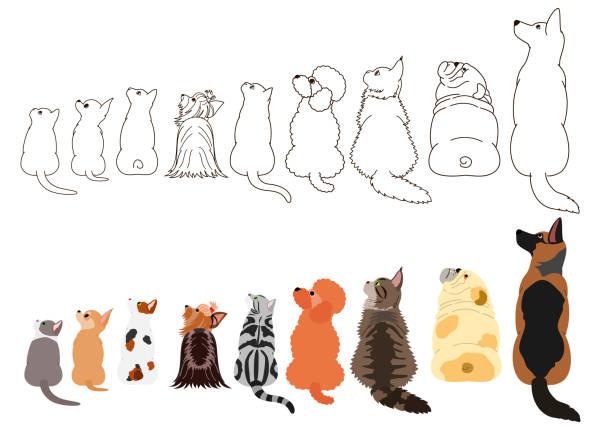 犬と猫が行の横探して ベクターアートイラスト