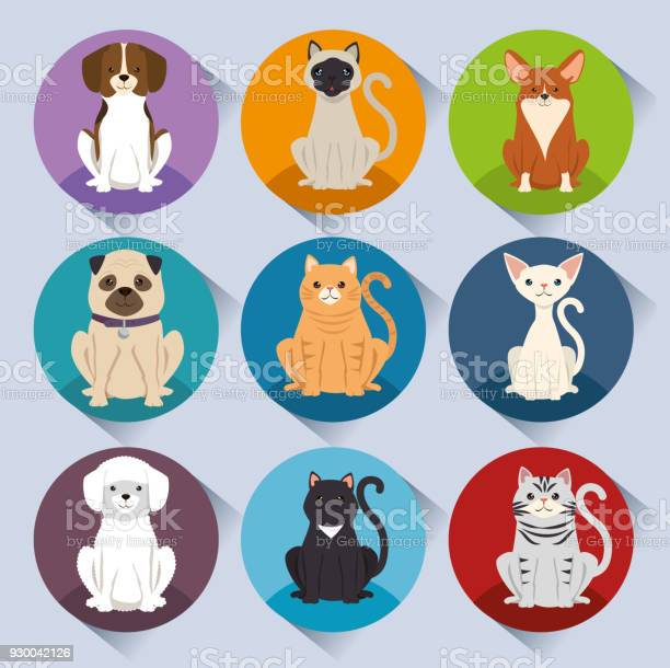 Dogs and cats pets characters vector id930042126?b=1&k=6&m=930042126&s=612x612&h=mswpuheiy4ee1ydng1 v2dvdy8m6r xx6amdd7tgd7s=