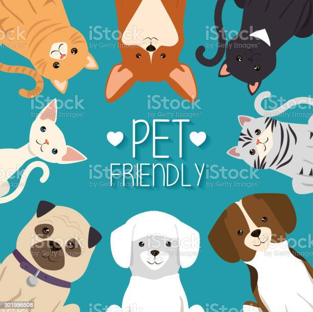 Dogs and cats pets friendly vector id921996508?b=1&k=6&m=921996508&s=612x612&h=mbl60c smlkmhl iyy qwibjkydvwrb j lrb qmmgg=