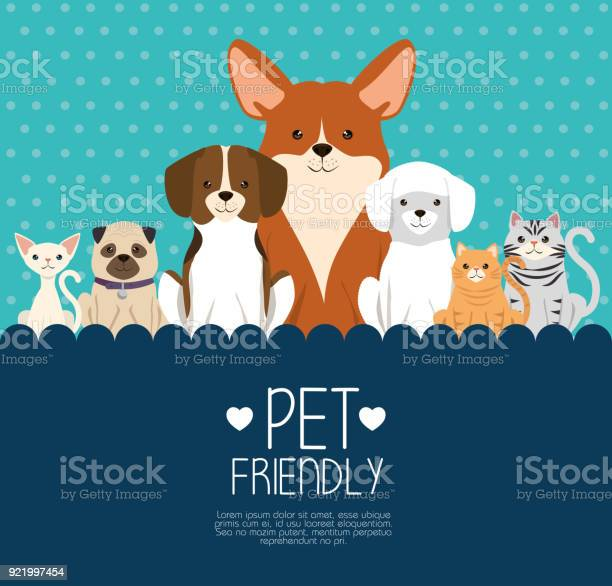Dogs and cats pets friendly vector id921997454?b=1&k=6&m=921997454&s=612x612&h=vyr0zgksv89ofp7lg4utmeninmsmctxwtviw1aqmziw=