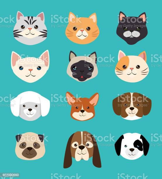 Dogs and cats pets friendly vector id922000550?b=1&k=6&m=922000550&s=612x612&h=eddapqtadr0qbtrk7rddrsfrkmww8u6yigtiithjbaq=