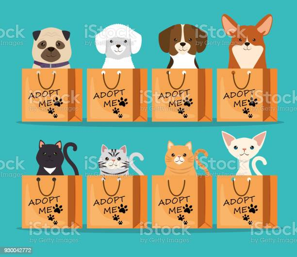Dogs and cats pets in adoption bags characters vector id930042772?b=1&k=6&m=930042772&s=612x612&h=ruqphisvvdrzn7eudlwi0hp3all1wa0hwpe5if35 sa=