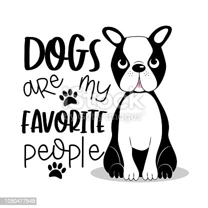Vector Cartoon Character Cute Boston Terrier Dog Poses Set Royalty Free  Cliparts, Vectors, And Stock Illustration. Image 110716129.