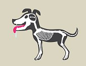 Dog's Bone Marrow