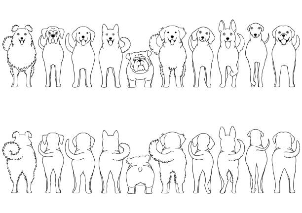 犬はボーダーセットラインアートを繁殖させる ベクターアートイラスト