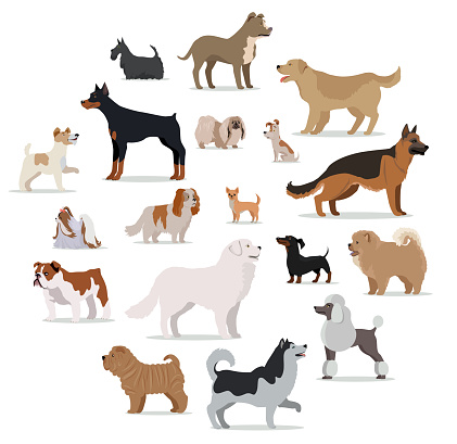 Dogs Breed Set in Cartoon Style Isolated on White.