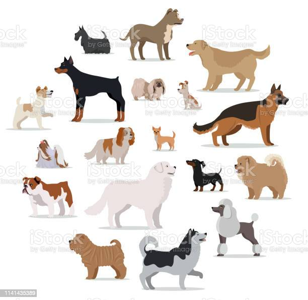 Dogs breed set in cartoon style isolated on white vector id1141435389?b=1&k=6&m=1141435389&s=612x612&h=fypko aixbv moweebtsgkr4bakzbok6q7ueemqpjmm=