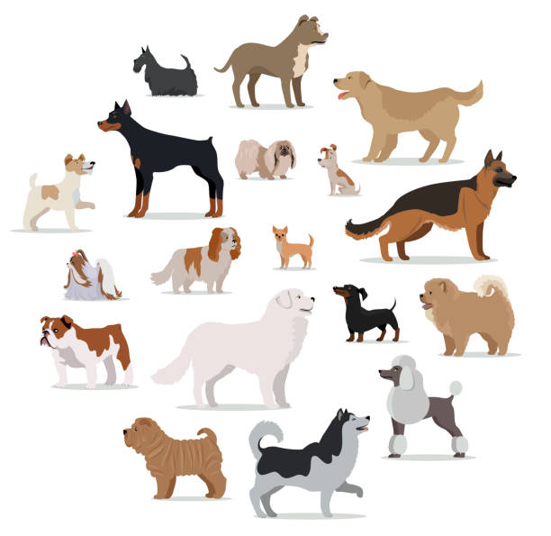 Dogs Breed Set in Cartoon Style Isolated on White. Dogs breed set isolated on white. Collection of big and small puppies. Different types of dogs. Exhibition of popular dog canine species. Pedigreed animals in cartoon style. Vector illustration dog stock illustrations