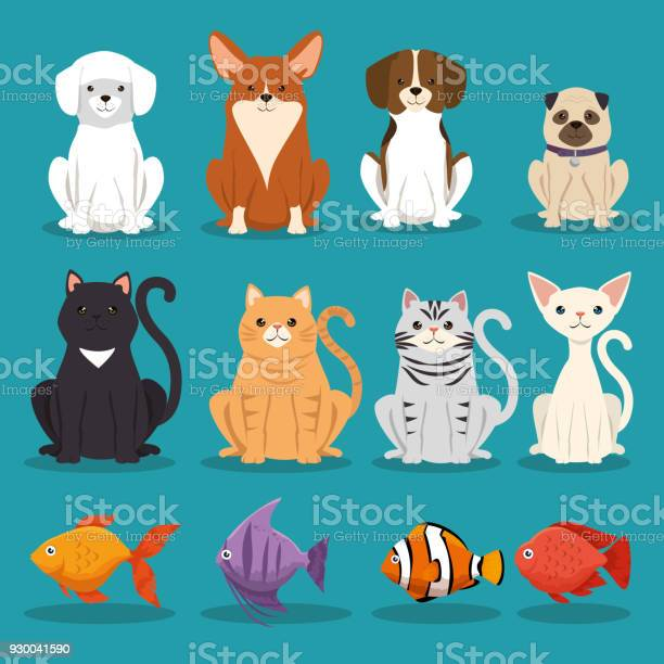 Dogs cats and fish pets characters vector id930041590?b=1&k=6&m=930041590&s=612x612&h=vlbywbxbf1gat9ehnmkw9p7woa6 7mim2gb0j7cn2i8=