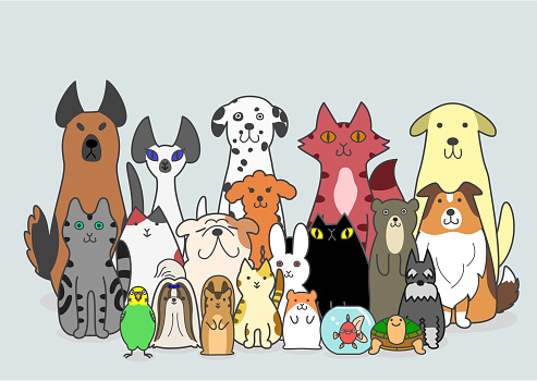 dogs, cats and small animals group