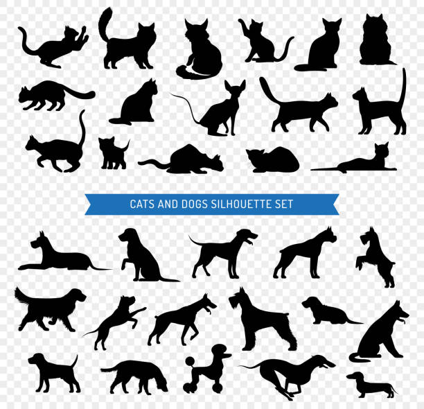 dogs cats black silhouette set Black silhouette set of different breeds of dogs and cats on transparent background isolated vector illustration dog stock illustrations