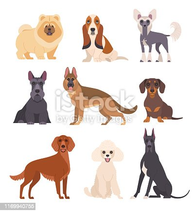 Vector illustration of various breeds of dogs, such as chow chow, mini poodle, basset hound, chinese crested dog and other. Isolated on white.