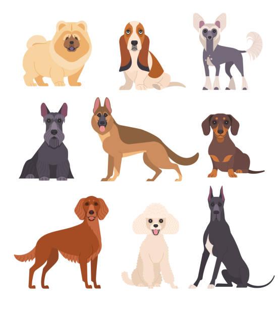 bildbanksillustrationer, clip art samt tecknat material och ikoner med hundar samling. - tax