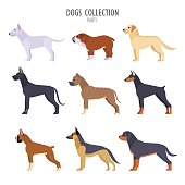 Vector collection of  different dogs breeds - bull terrier, English bulldog, Labrador, Boxer, German Shepherd Dog, Staffordshire Terrier, Great Dane, Rottweiler, Doberman Pinscher, isolated on white.