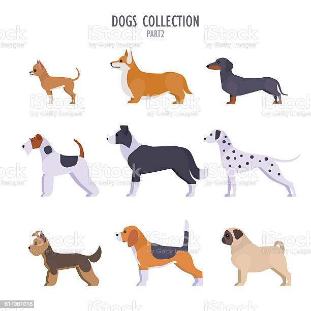 Dogs collection vector id617361018?b=1&k=6&m=617361018&s=612x612&h=wmaojsh9gmxlzgmuxdsedwgxyiycagtid3pdu2je mk=