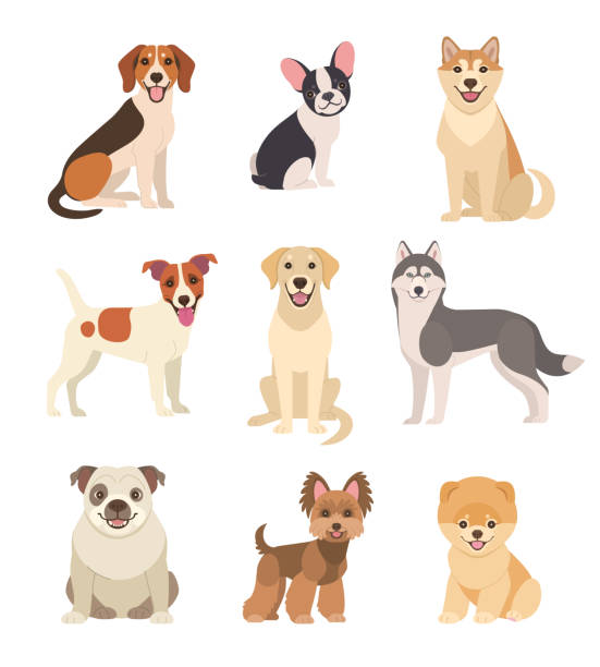 Dogs collection. Vector illustration of funny cartoon different breeds dogs in trendy flat style. Isolated on white. dog stock illustrations