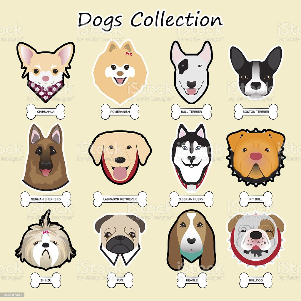dogs collection,vector vector art illustration