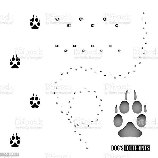 Dogs footprint set isolated on white background vector design element vector id1064189348?b=1&k=6&m=1064189348&s=612x612&h=zambwwho35qxlkxkabzv rccfgvgjcoevofzfim4iug=