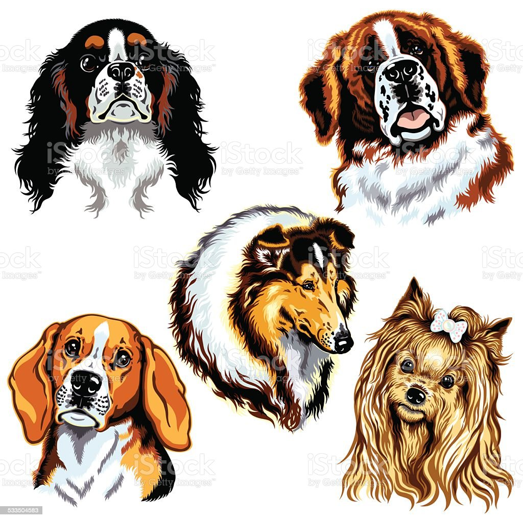 dogs heads vector art illustration