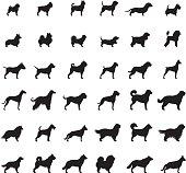 Dogs Icon Set