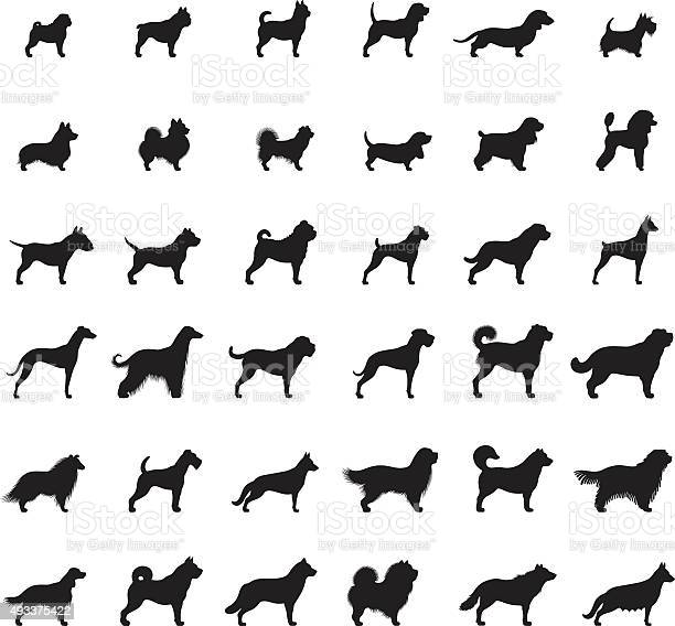 Dogs icon set vector id493375422?b=1&k=6&m=493375422&s=612x612&h=3g1nj2qb5tsx8fuxywxsjbm6pa b ngxbyigv29 w y=