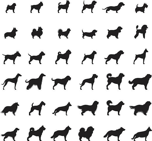 Hunde-Icon-Set – Vektorgrafik