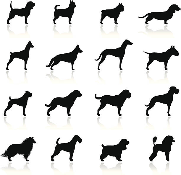 hunde-icon-set - schoßhunde stock-grafiken, -clipart, -cartoons und -symbole