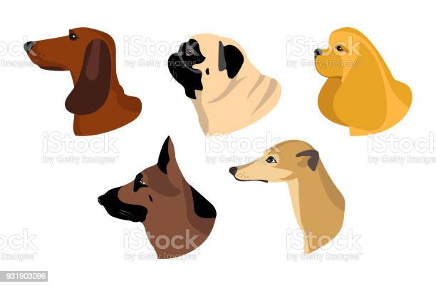 Dogs icons in flat style vector set of dachshund husky and other vector id931903096?b=1&k=6&m=931903096&s=612x612&h=zenl4jexrc02as jjrh atv7lkmpmau0znrtw3j9k6e=