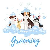 dogs  in soap foam