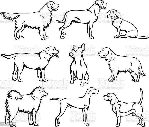 Dogs line art set vector id472281475?b=1&k=6&m=472281475&s=612x612&h=r9srus99nbjuteep2mtbfggwupdafznlbshev405tuw=