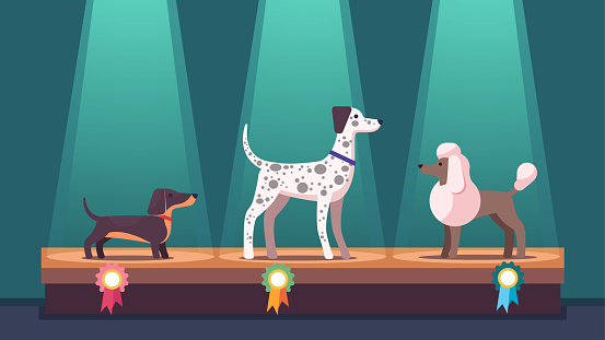 Dogs on winner pedestal with award ribbons at dog show. Dachshund, poodle & Dalmatian competition dog champions on podium under spotlights. Canine exhibition. Flat vector illustration