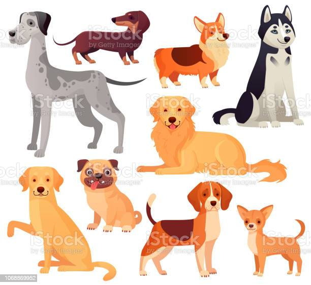Dogs pets character labrador dog golden retriever and husky cartoon vector id1068869952?b=1&k=6&m=1068869952&s=612x612&h=4lqhzlgkv3k35jr90g1evjhmblakwa4fyf1zlrpihge=