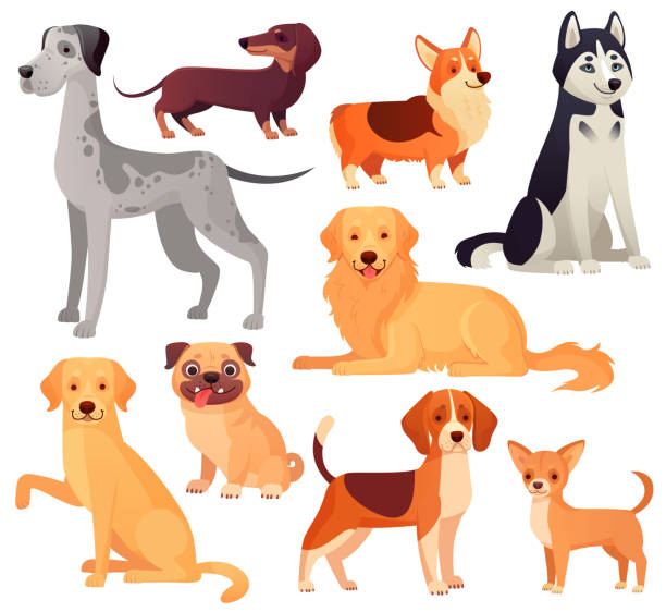 illustrazioni stock, clip art, cartoni animati e icone di tendenza di dogs pets character. labrador dog, golden retriever and husky. cartoon vector isolated illustration set - labrador retriever