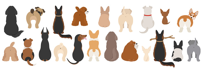 Dogs poses behind. Dog`s butts. Flat design clipart