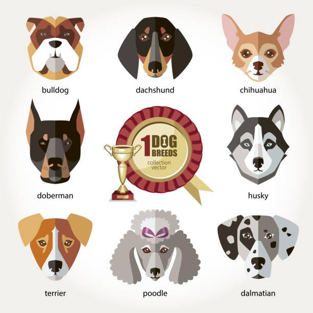 hunde set symbol kopf maulkörbe rasse hunde bulldogge dackel husky chihuahua dalmatiner dobermann-terrier pudel - kopfschüsse stock-grafiken, -clipart, -cartoons und -symbole