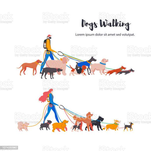 Dogs walkers french bulldog toy terrier spitz corgi basset hound vector id1074030962?b=1&k=6&m=1074030962&s=612x612&h=uc91 sdpxvixdek82ovsh3tyyrzebmyz2gkm weohsg=